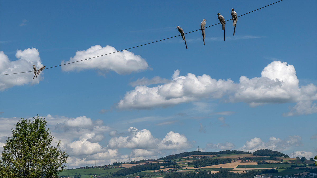 Vogelgezwitscher auf Skulptuerenweg im Golfpark Oberkirch