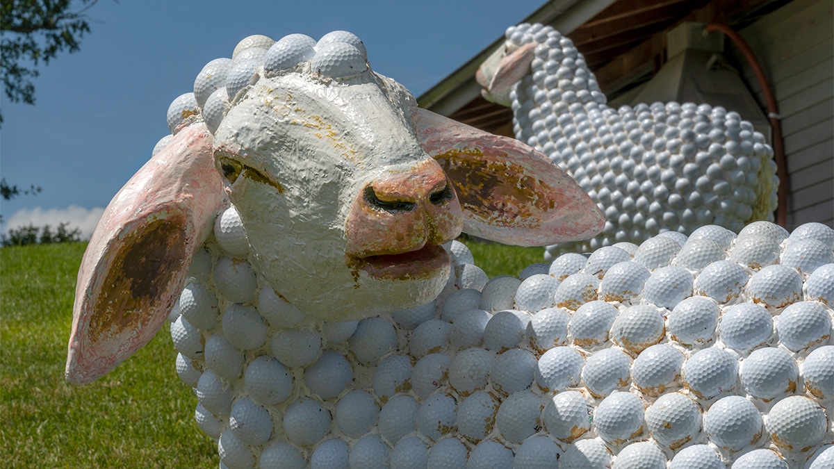 Die Schafe sind los Golfpark Oberkirch